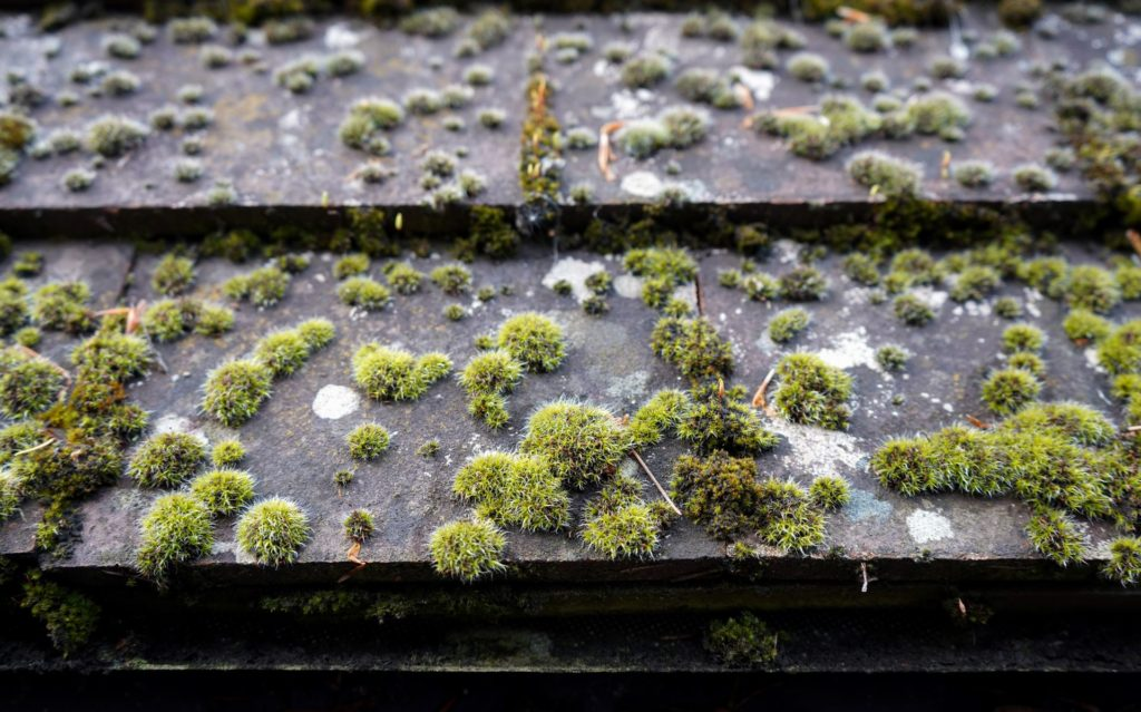 How to Maintain Your Home's Roof 2
